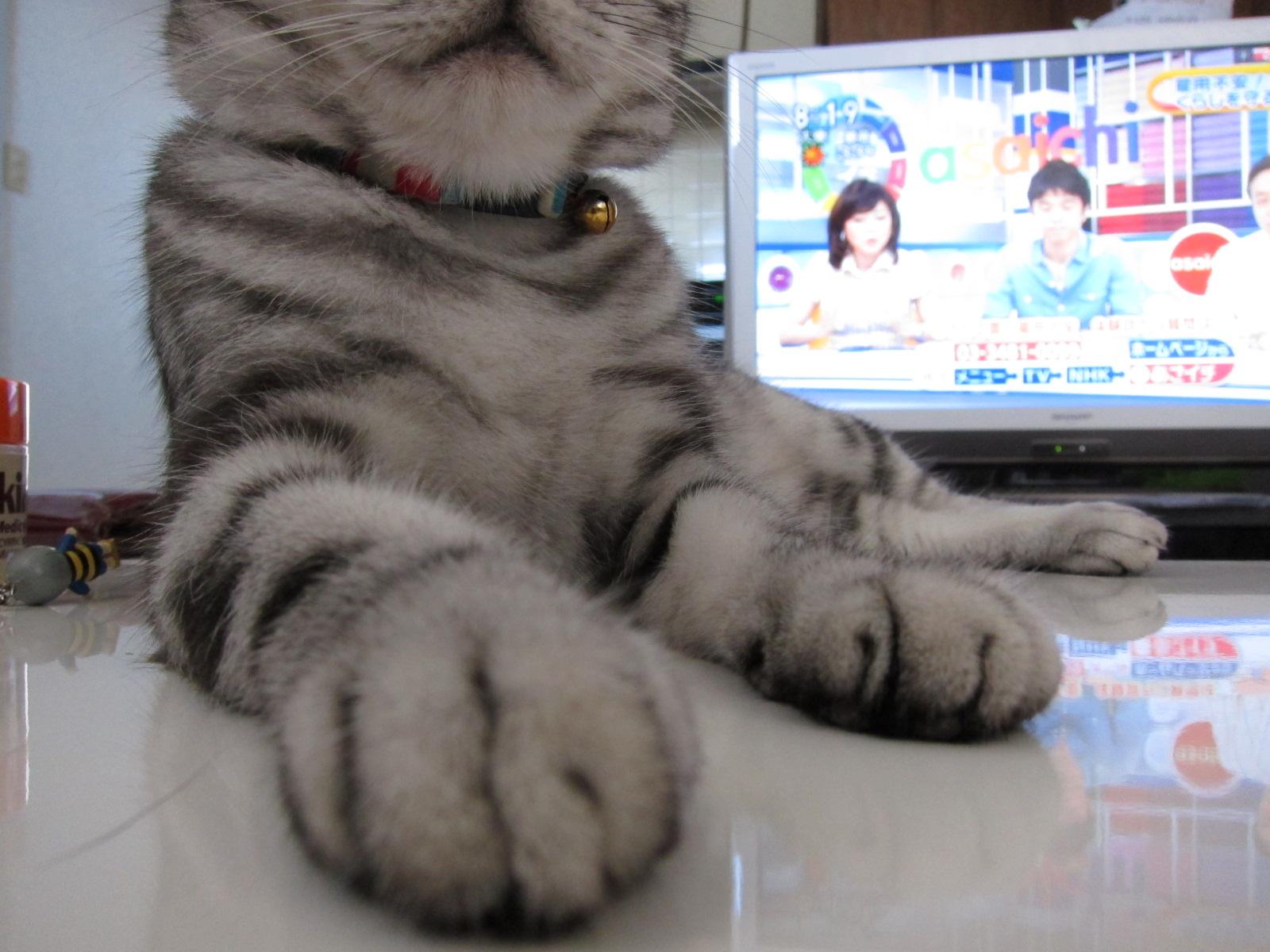 white tiger._c0153966_18132245.jpg