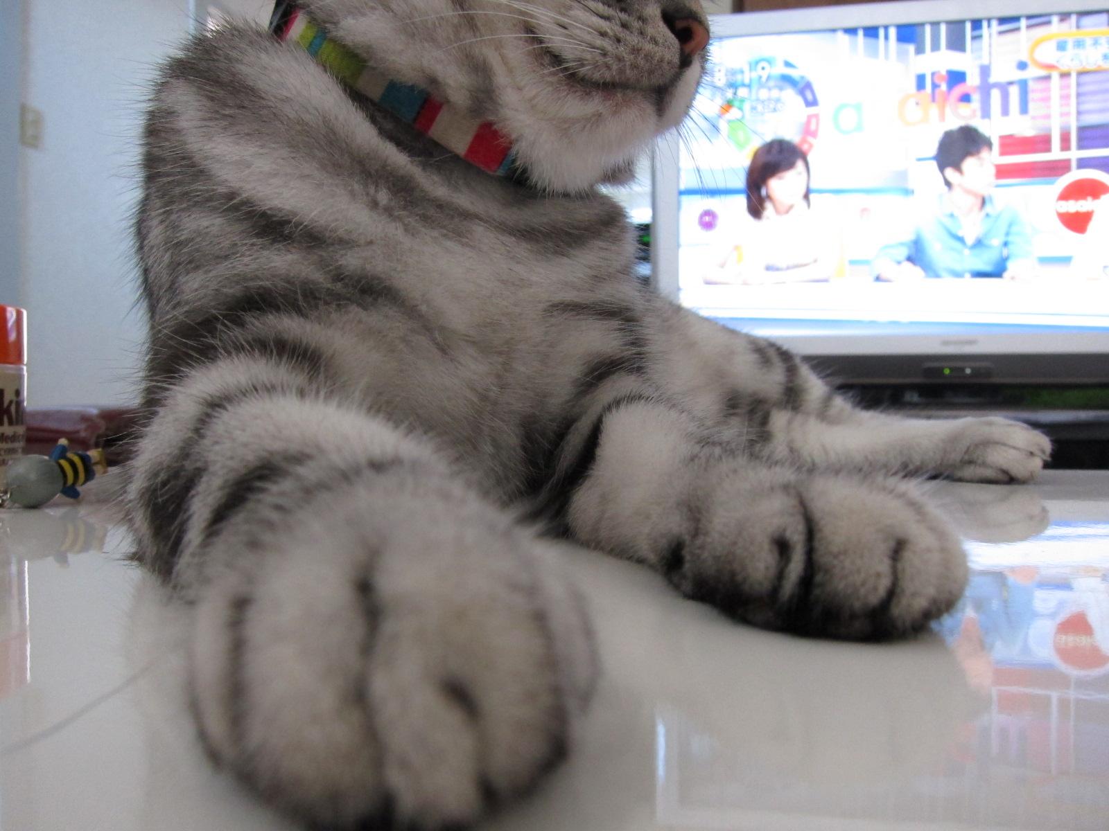 white tiger._c0153966_18143639.jpg