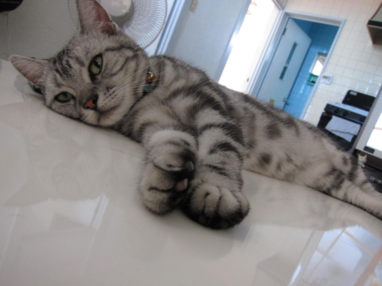 white tiger._c0153966_18165518.jpg