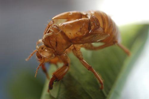 季節柄虫が続きます。_c0185674_2025490.jpg