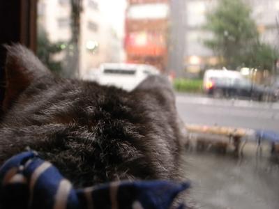 豪雨_a0180681_16572491.jpg