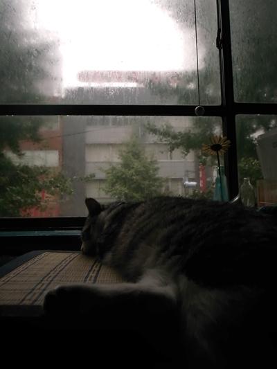 豪雨_a0180681_16573494.jpg