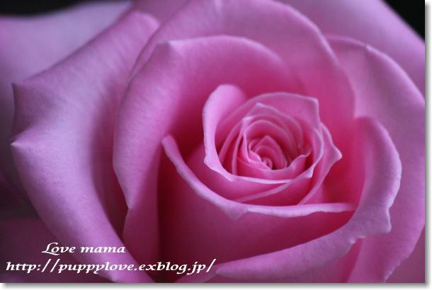 b0136683_9303061.jpg