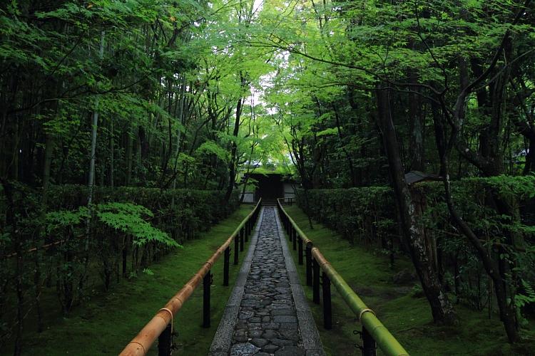 高桐院(大徳寺塔頭)_e0051888_22102377.jpg