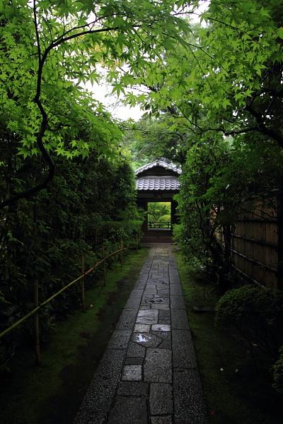 高桐院(大徳寺塔頭)_e0051888_22103650.jpg