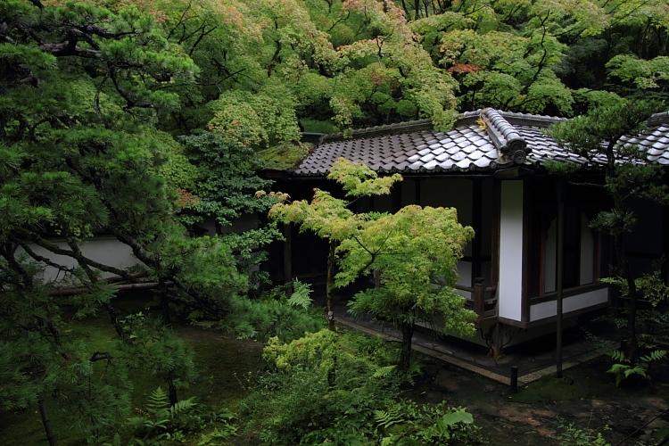 高桐院(大徳寺塔頭)_e0051888_22114815.jpg