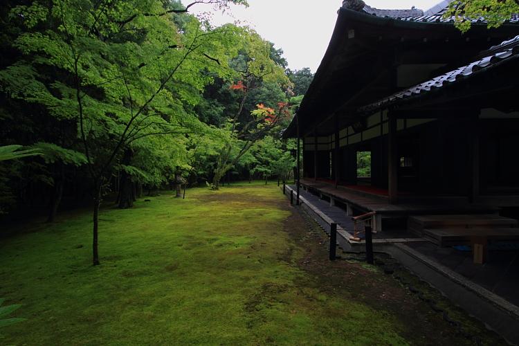 高桐院(大徳寺塔頭)_e0051888_22121132.jpg