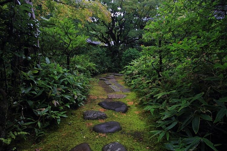 高桐院(大徳寺塔頭)_e0051888_2213129.jpg