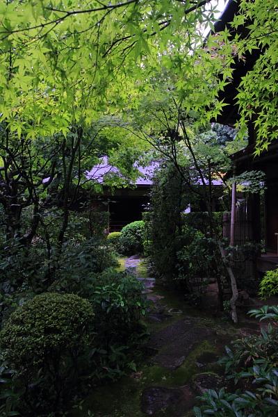 高桐院(大徳寺塔頭)_e0051888_22132859.jpg