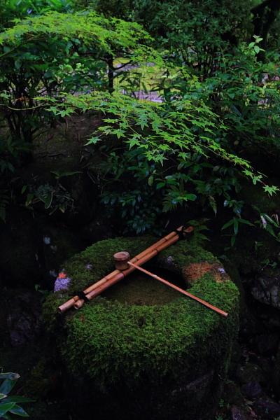 高桐院(大徳寺塔頭)_e0051888_22134248.jpg