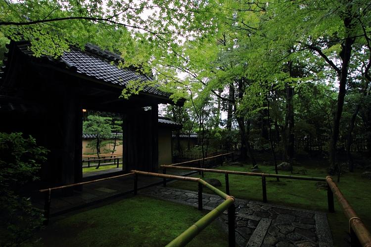 高桐院(大徳寺塔頭)_e0051888_22153775.jpg