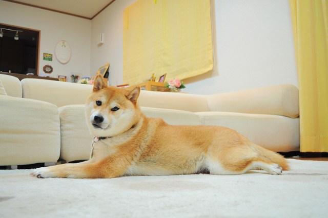 プニプニちゃん_a0126590_55456.jpg
