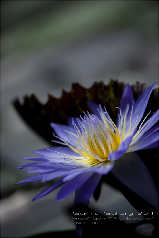 Blue heart\'s_f0195893_204016100.jpg