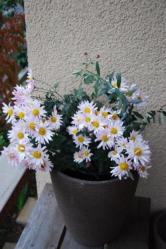 花のしつらえ : 秋冬編_c0124100_1437356.jpg
