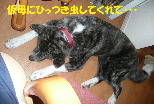f0121712_16383685.jpg
