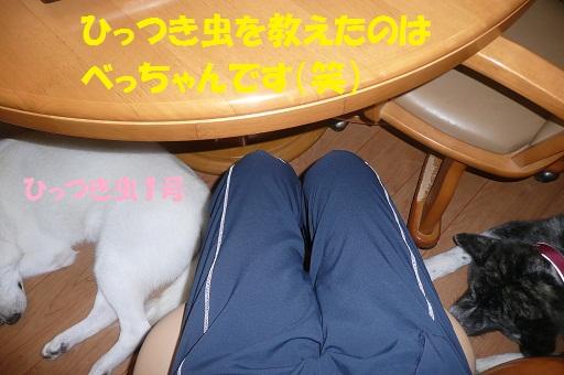 f0121712_16384533.jpg
