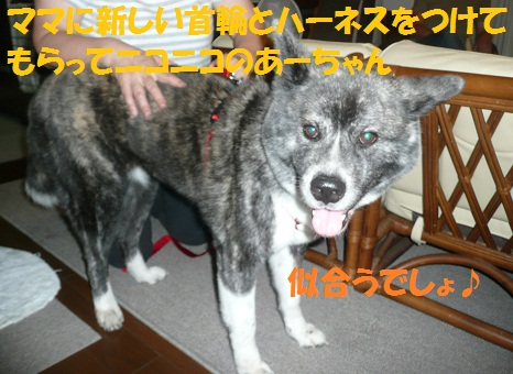 f0121712_22523471.jpg