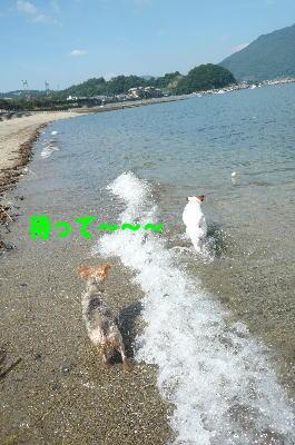 d0013645_16175236.jpg
