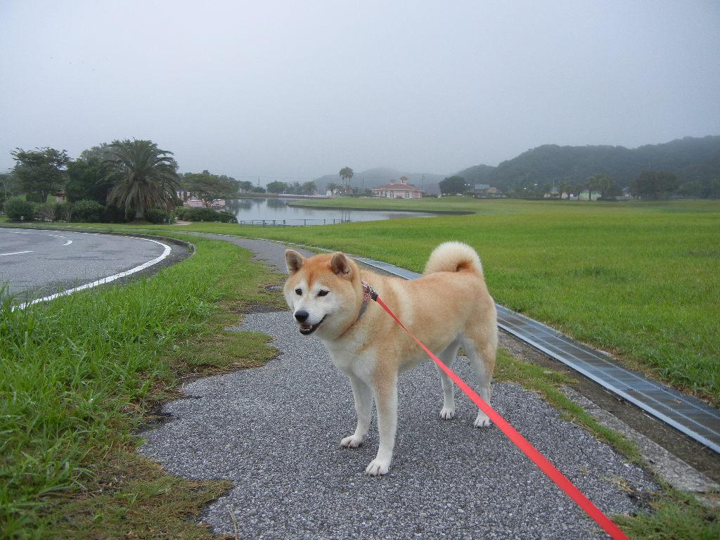 2011年8月27日(土)今日も涼しい~!_f0060461_1012388.jpg