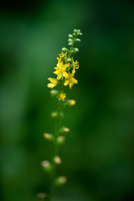 献花・庭の花。_b0022268_2055367.jpg
