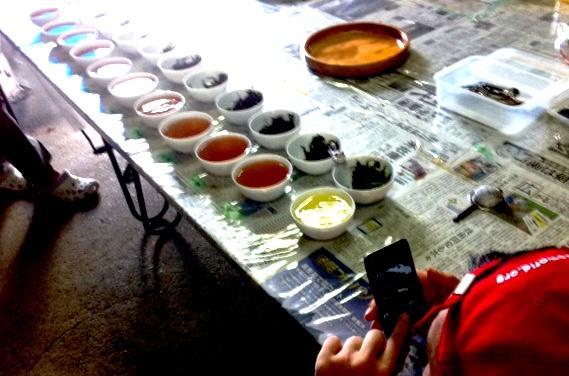 無農薬の紅茶作り体験!ちょろり_b0087077_23245442.jpg