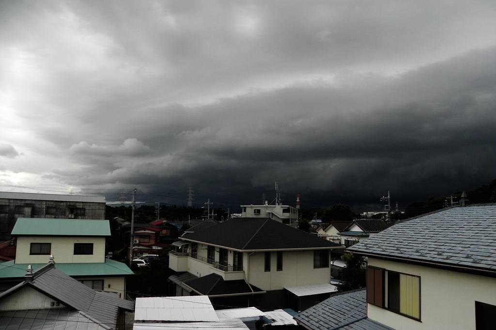 今週の蓮カワセミ/大雨洪水警報_b0024798_926242.jpg