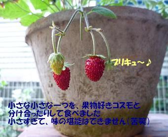 a0154801_1604579.jpg