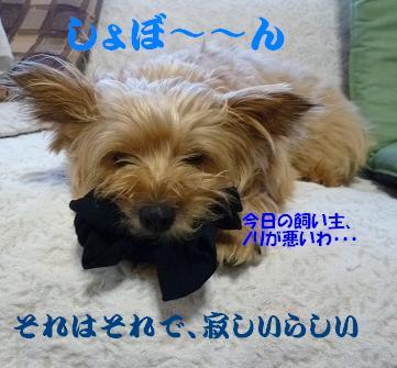a0154801_1621439.jpg