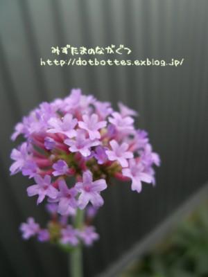 d0170109_10374950.jpg