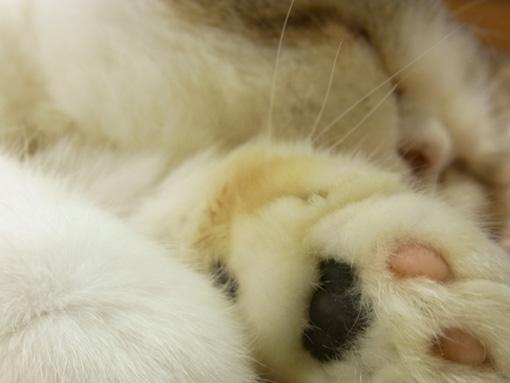 猫カフェ_a0133915_2444292.jpg