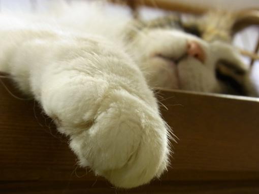 猫カフェ_a0133915_2461660.jpg