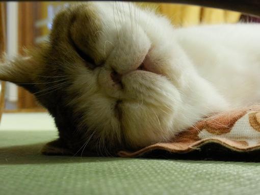 猫カフェ_a0133915_247759.jpg