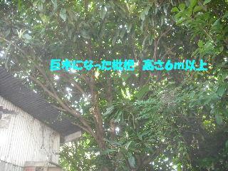 f0031037_20203186.jpg