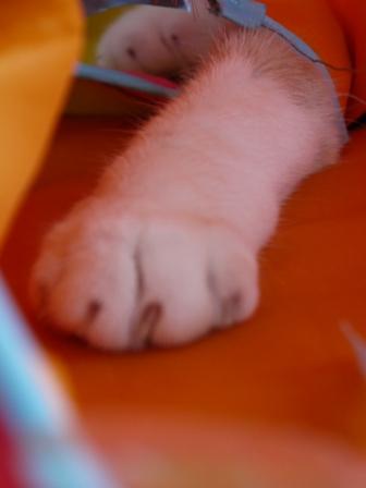 猫のお友だち マミちゃん編。_a0143140_18302595.jpg