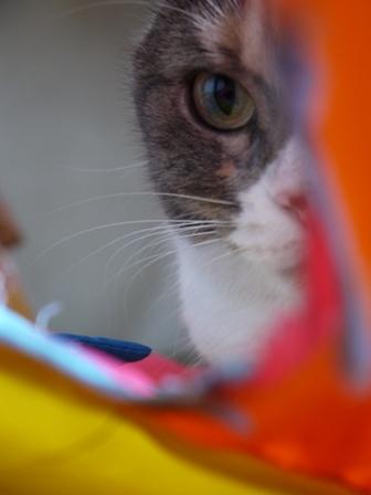 猫のお友だち マミちゃん編。_a0143140_18311354.jpg