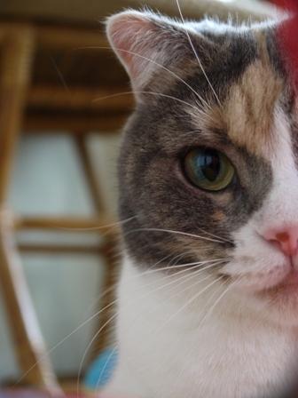 猫のお友だち マミちゃん編。_a0143140_18345566.jpg