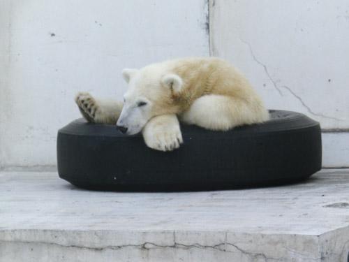 おっさんのような小熊とミドリグマ_d0154140_21391718.jpg