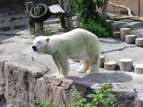 おっさんのような小熊とミドリグマ_d0154140_2139595.jpg