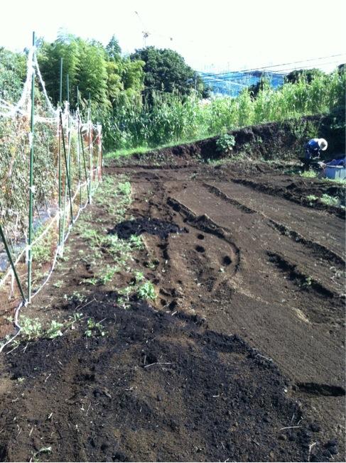カーヴォロネーロの畝作り~播種~ネット張りまでいっきに!_c0222448_1549361.jpg