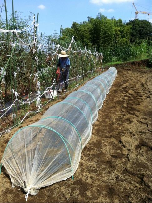 カーヴォロネーロの畝作り~播種~ネット張りまでいっきに!_c0222448_1550464.jpg
