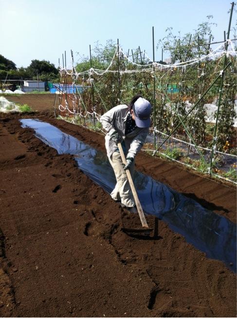カーヴォロネーロの畝作り~播種~ネット張りまでいっきに!_c0222448_15504733.jpg