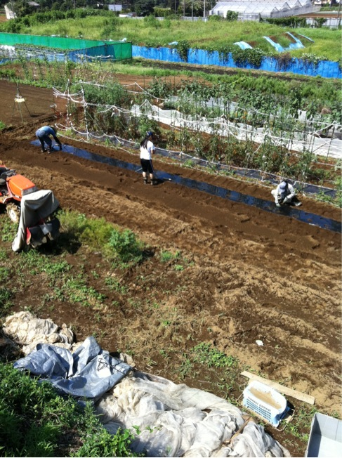 カーヴォロネーロの畝作り~播種~ネット張りまでいっきに!_c0222448_15505928.jpg