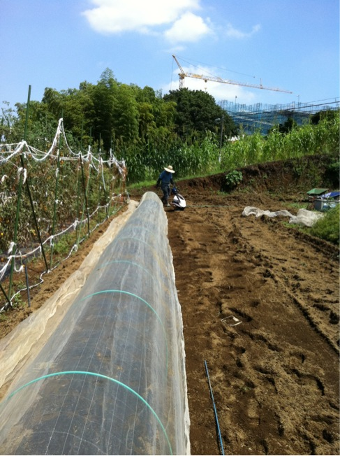カーヴォロネーロの畝作り~播種~ネット張りまでいっきに!_c0222448_1551996.jpg