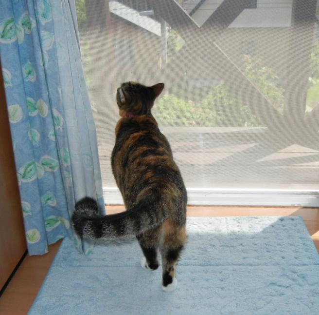 2011年8月28日(日)新涼の海!_f0060461_10352255.jpg