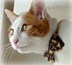 ヴィンテージちょこリボン猫首輪