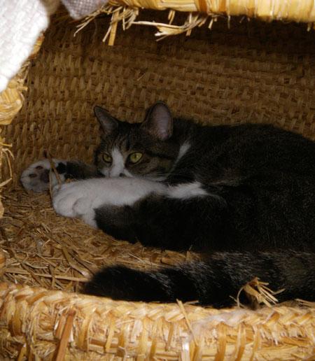 逃げ場所は猫ちぐら(^^)v Huuのゴロンゴロン_a0136293_16124525.jpg