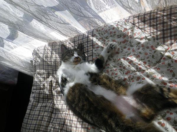 逃げ場所は猫ちぐら(^^)v Huuのゴロンゴロン_a0136293_16323828.jpg