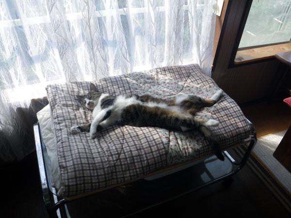 逃げ場所は猫ちぐら(^^)v Huuのゴロンゴロン_a0136293_1632527.jpg
