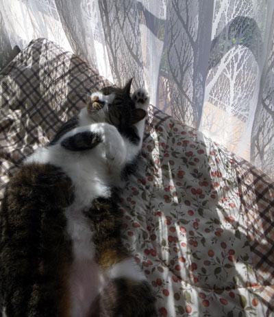 逃げ場所は猫ちぐら(^^)v Huuのゴロンゴロン_a0136293_1633150.jpg