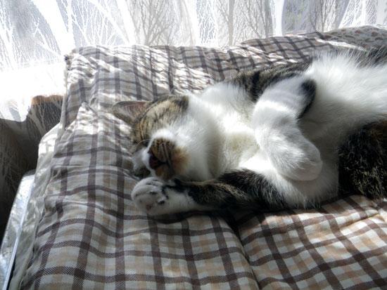 逃げ場所は猫ちぐら(^^)v Huuのゴロンゴロン_a0136293_16343934.jpg